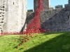 Weeping window Caernarfon by artist Paul Cummins and designer Tom Piper